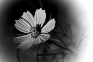 014 10bw by Placi1