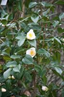 view to camellias 13 by ingeline-art