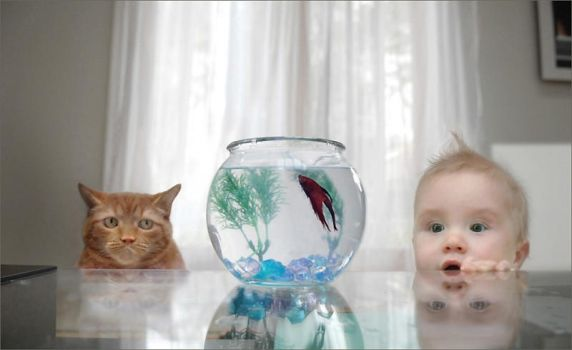 the cat,the fish, and the baby by password09