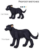 Sirius Black - Dogs by blue-fire