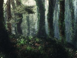 Ancient woods by FrankT