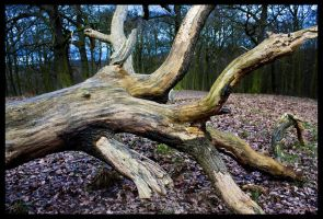 Toppled Tree by neoweb