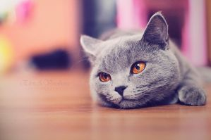 dreams of sour cream ... by ELVIRARUS