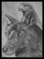 Wolf And Eagle .Redone. by MorRokko