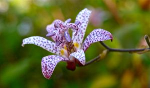 Little Orchid by gee231205