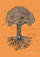 anatomy of a tree by benjaminography