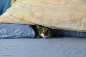 Hiding under pillows by Cinciut