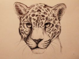 Jaguar by caughtinthehurricane