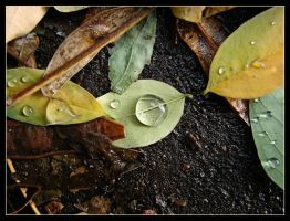 Leaves and drops by Elenya-Noldo