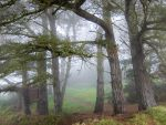 Brittany 30 - Forest in the Fog by HermitCrabStock