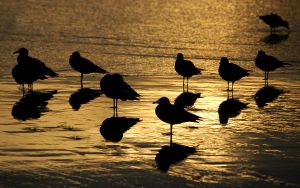 Seagull Sunset Silouette by robgbob