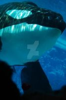 A moment to remember by Tilikum