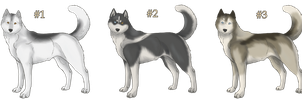 Husky Adoptables :CLOSED: by AkaKennel