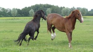 Playing Horses by Horselover60-Stock