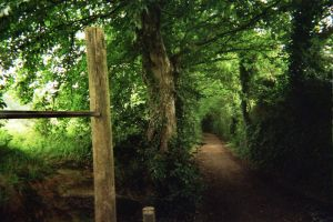 Green Way by oldspider26