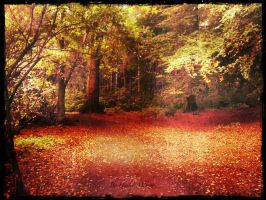 Colors In The Forest 2 by haileysthelimit