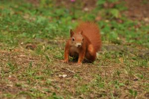 Squirrel IV by parisky-stock