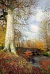 Minnowburn Beeches, November by Gerard1972