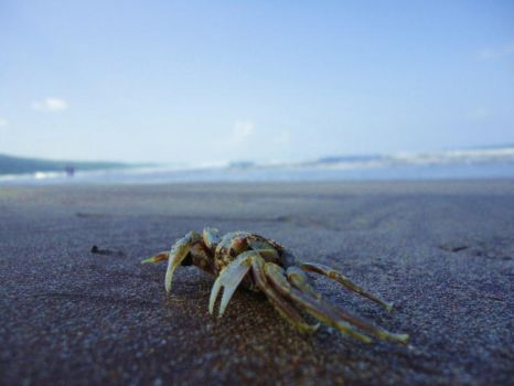 The Life of a Crab by litwiz