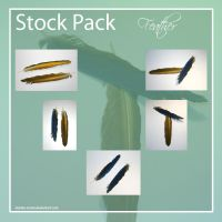 : Feather STOCK PACK : by DeSSiTa-SToCKS