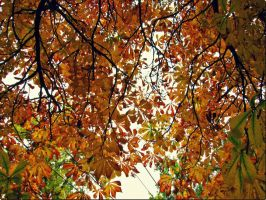 Golden Leaves by GirlinTranslation