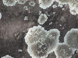 Lichen Spots 3 by CharadeTextures