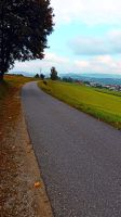 Country road in vivid scenery by patrickjobst