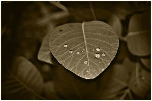 Dreams of Raindrops Sepia by soldierofsolace