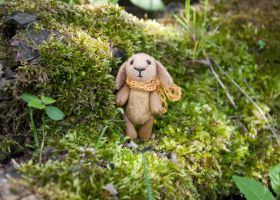 bunny in the moss by freedragonfly
