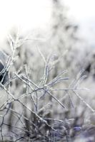 Frosted by jaelise
