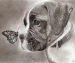 Dog and Butterfly by TeSzu
