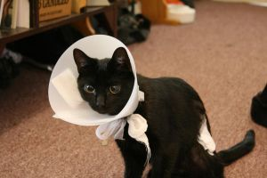 .:Cone of shame:. by matrix9000