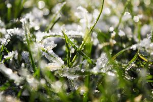 frost in grass by Dodephine