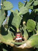 Cactus Chair by Tamlin-Haven