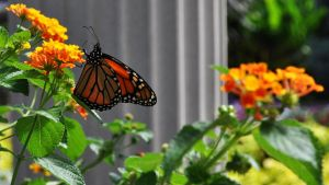 Flower and Monarch Butterfly by ladybug95