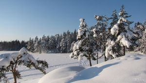 Snowy Trees by the Lake by Pajunen