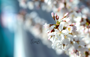 Spring has ended by xMelis