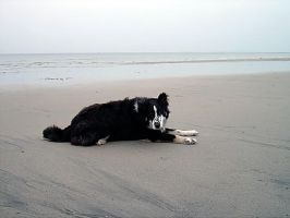 20030708 Beach Buddy by PetersonPhotos