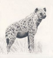 Spotted Hyena by WillemSvdMerwe