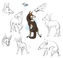 Talo Sketch Page by Susiron