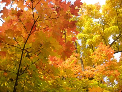 Fall Foilage by ash4love