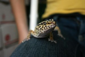 leopard gecko lookin' at you by evilqueen112