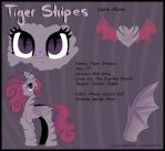 Tiger Stripes Reference Sheet by Drawing-Heart