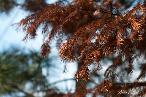 brown pine tree by albuemil