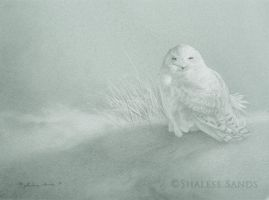 Snowy Owl Study by Misted-Dream