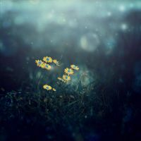daisies in the moonlight by ajkabajka