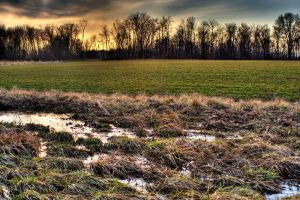Flooded Field by ZachSpradlin