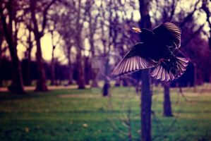 Flying Bird at Hyde Park by TheLovingKind89