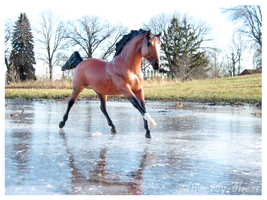 Breyer - Slippery Canter by The-Toy-Chest