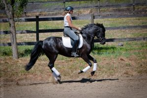 Dressage mare by kalalynn